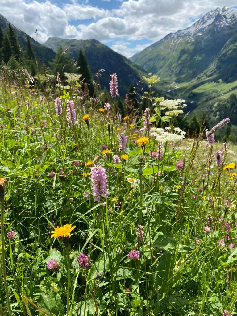 Blumen und Ausblick beim Wandern in der Val Medel