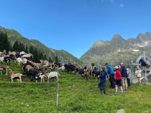 Ziegen auf der Alp Puzzetta, Wanderer in der Surselva