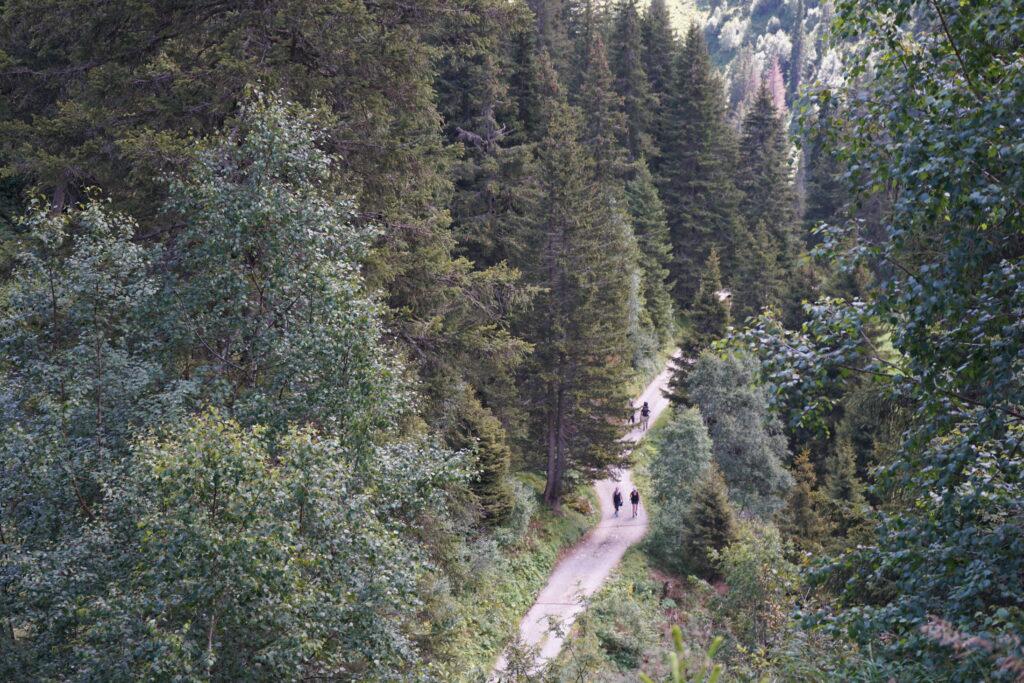 Wandern durch den Wald in der Surselva