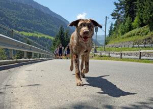 Hund auf der Wanderung